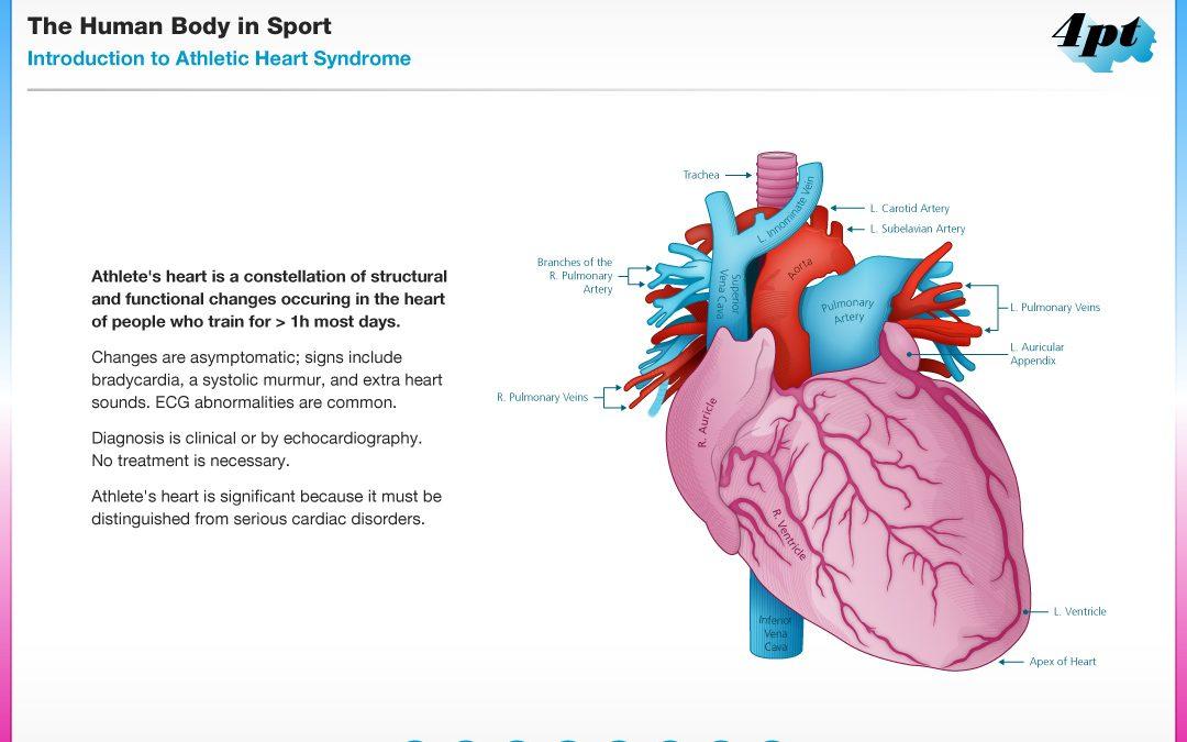 Human Body in Sport