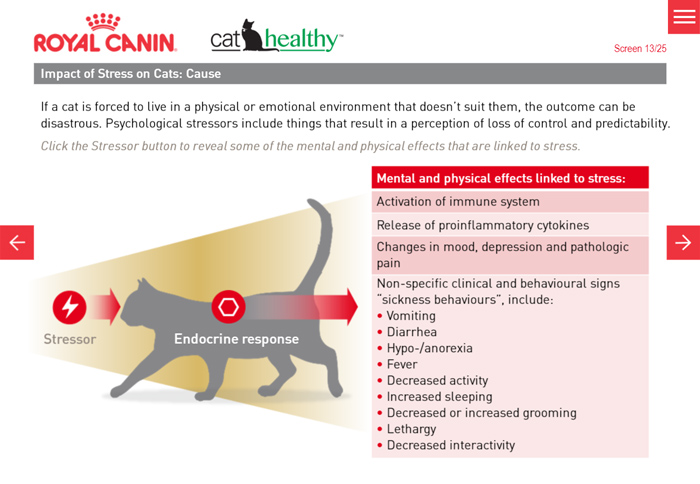 Impact of Stress on Cats