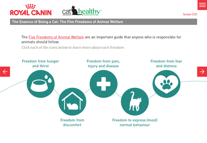 The Essence of Being a Cat